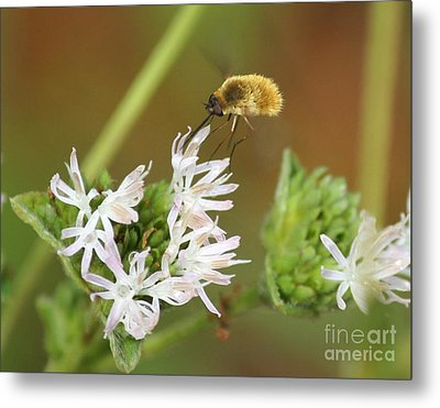 Bee Fly Don't Bother Me Metal Print