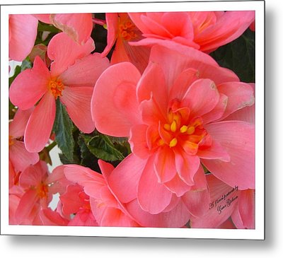 Metal Print featuring the photograph Behold My Beauty by Frank Wickham