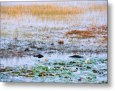 Beware Of Still Waters Metal Print by Jan Amiss Photography