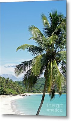 Metal Print featuring the photograph Big Corn Island Palm Tree Nicaragua by John  Mitchell