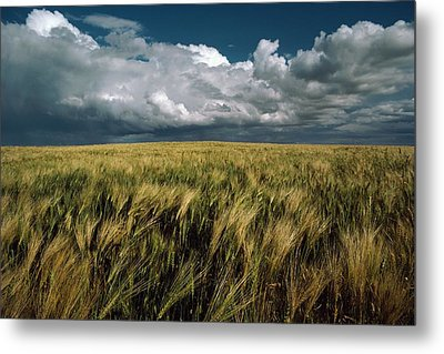 Billowy Clouds Form Over A Wind-swept Metal Print by Medford Taylor