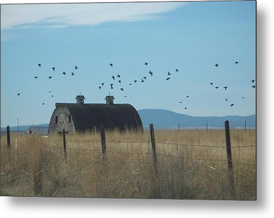Metal Print featuring the photograph Birds Over Barns by Debbi Saccomanno Chan
