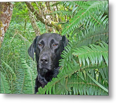 Black Dog In The Ferns Metal Print