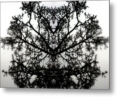 Metal Print featuring the photograph Black Mold by Amy Sorrell