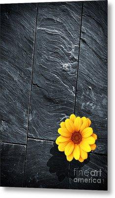 Black Schist Flower Metal Print by Carlos Caetano