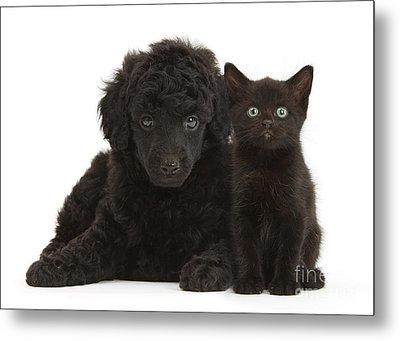 Black Toy Poodle And Black Kitten Metal Print