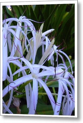 Metal Print featuring the photograph Blissfully by Frank Wickham