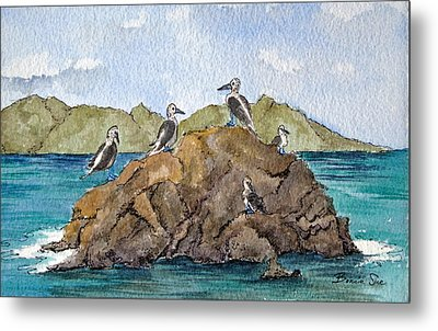 Blue Footed Boobies In Galapagos Metal Print by Bonnie Sue Schwartz