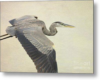 Blue Heron On Canvas Metal Print by Deborah Benoit