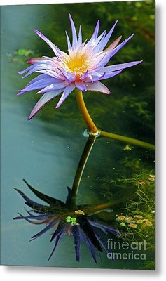 Metal Print featuring the photograph Blue Stargazer Lily by Larry Nieland