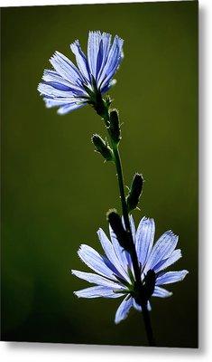 Blue Wildflower Metal Print by  Onyonet  Photo Studios