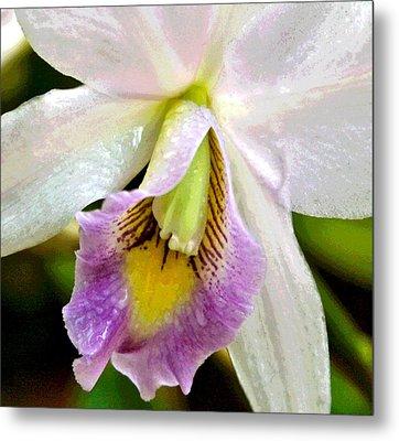 Blushing Orchid Metal Print