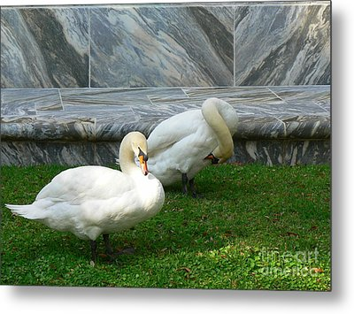 Bok Tower Swans Metal Print