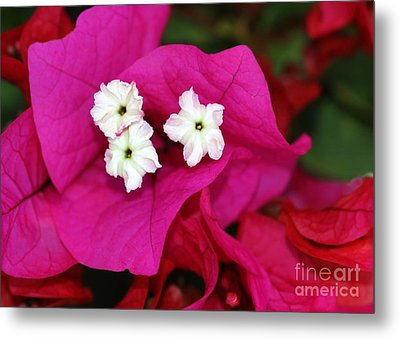Bouganvillea Metal Print by Sabrina L Ryan
