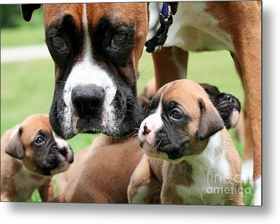 Boxer Mommy Watch Over Pups  Metal Print by Renae Laughner