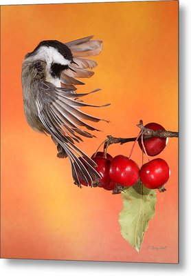 Metal Print featuring the photograph Bracing To Back Up by Gerry Sibell