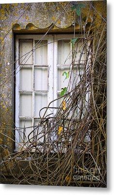 Branchy Window Metal Print
