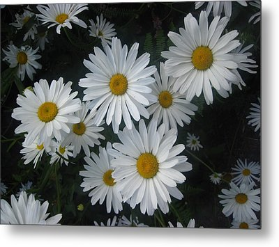 Bright Eyed Daisys Metal Print
