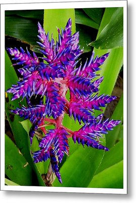 Metal Print featuring the photograph Brilliant And Bold by Frank Wickham