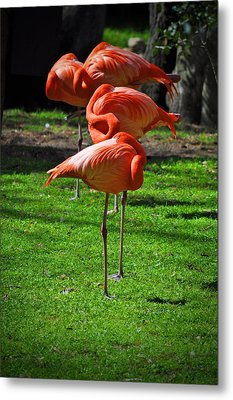 Brilliant Flamingos Metal Print by Mary Machare