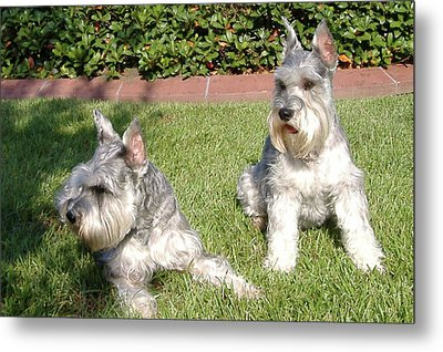 Brothers Metal Print by Diane Ferguson