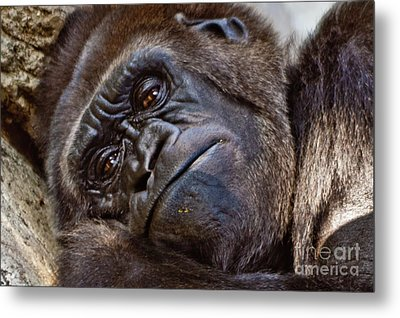 Brown Eyes Metal Print
