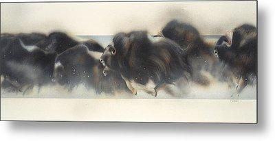 Buffalo In Winter Metal Print by Douglas Fincham
