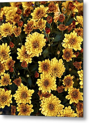Bunch Of Flowers Metal Print by Malania Hammer