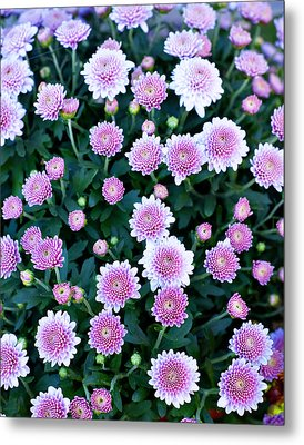 Bunch Of Pink Metal Print by Malania Hammer