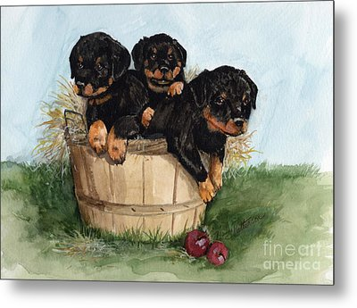 Metal Print featuring the painting Bushel Of Rotty Pups  by Nancy Patterson