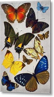 Butterflies, 19th Century Metal Print by Granger