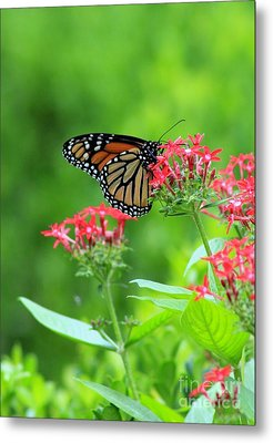 Metal Print featuring the photograph Butterfly Beauty by Laurinda Bowling