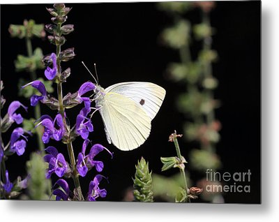 Metal Print featuring the photograph Butterfly by Denise Pohl