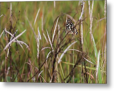 Metal Print featuring the photograph Butterfly In Flight by Fotosas Photography