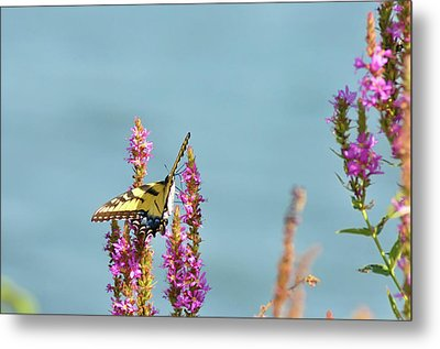 Butterfly Morning Metal Print by Bill Cannon