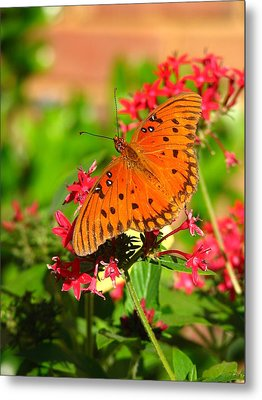 Metal Print featuring the photograph Butterfly On Pentas by Carla Parris