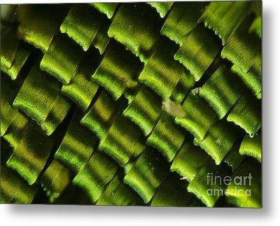 Butterfly Wing Scales Metal Print by Raul Gonzalez Perez