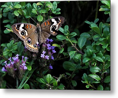 Butterfly With Torn Wings Metal Print by Robert Ullmann