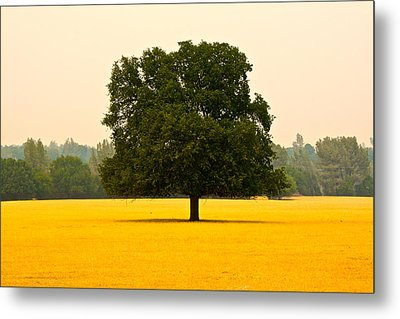 California Oak Metal Print