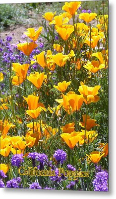 California Poppies Metal Print by Carla Parris