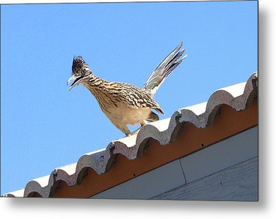 California Roadrunner Metal Print by Carla Parris