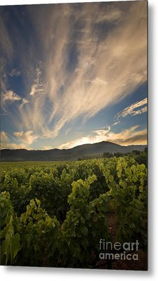 California Vineyard Sunset Metal Print by Matt Tilghman