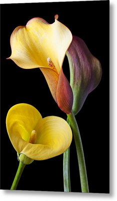 Calla Lilies Still Life Metal Print by Garry Gay