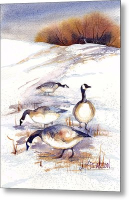 Canada Geese In Stubble Field Metal Print by Peggy Wilson