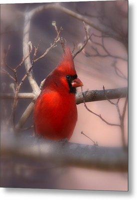 Cardinal - Unafraid Metal Print by Travis Truelove