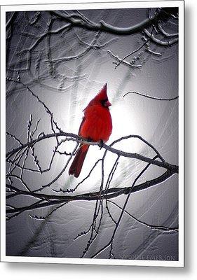 Metal Print featuring the photograph Cardinal by Yvonne Emerson AKA RavenSoul