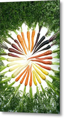 Carrot Pigmentation Variation Metal Print by Science Source