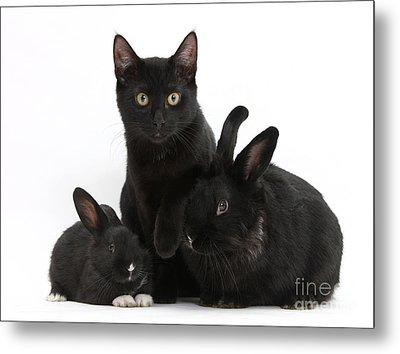 Cat And Rabbits Metal Print by Mark Taylor