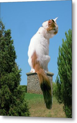 Metal Print featuring the photograph Cat On Pedestal by Bonnie Muir