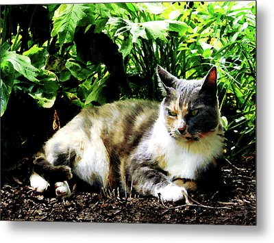 Cat Relaxing In Garden Metal Print by Susan Savad